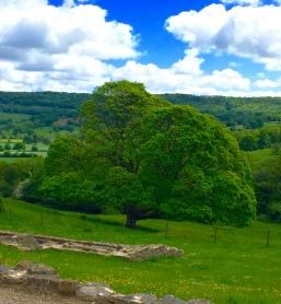 Oak tree near ruins of an ancient Roman Villa
