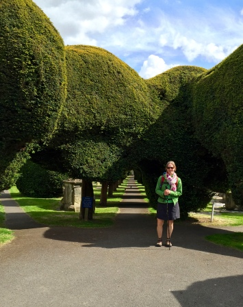 99 Yew trees in Painswick churchyard